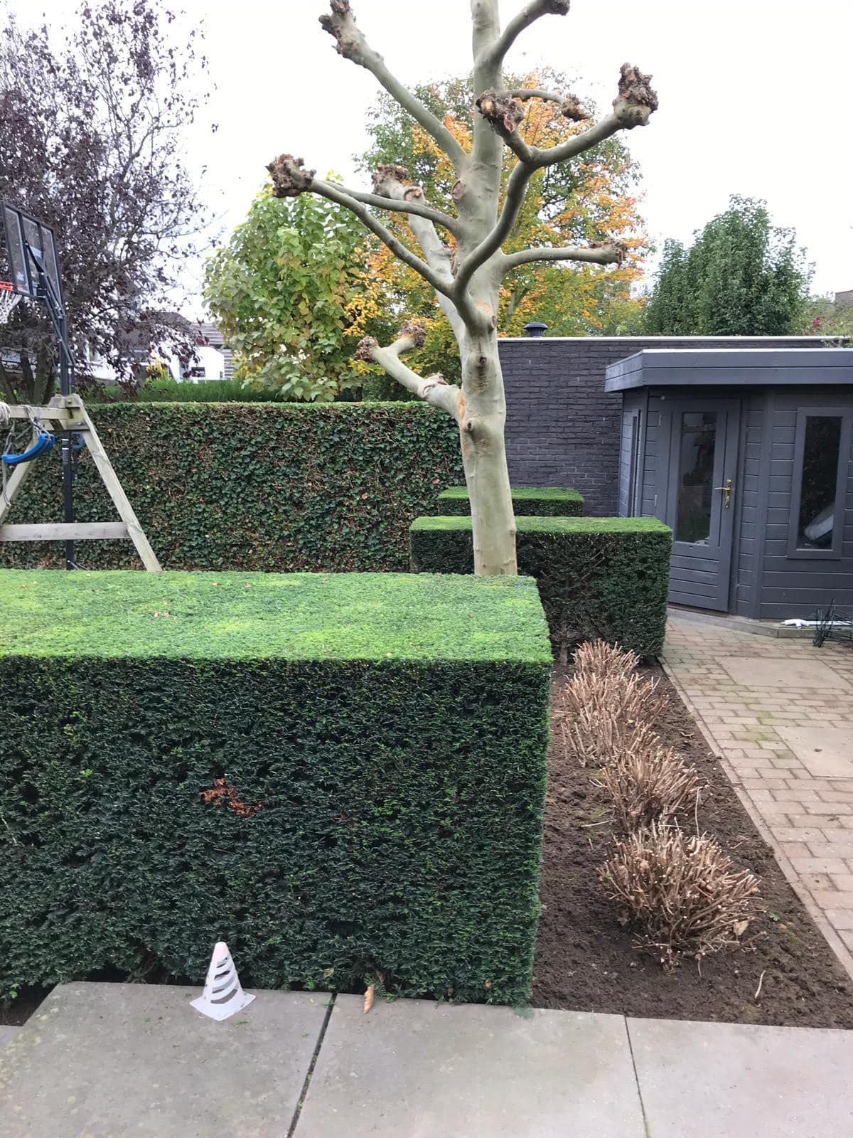 Maurits Garden - Portfolio - Tuinaanleg - Tuin Onderhoud 8