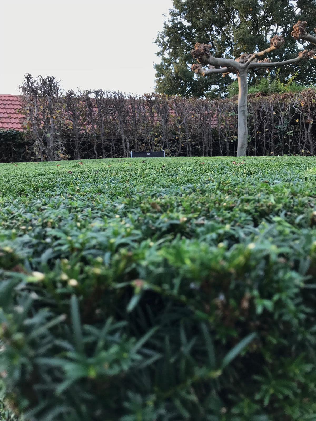Maurits Garden - Portfolio - Tuinaanleg - Tuin Onderhoud 7