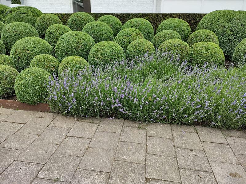 Maurits Garden - Portfolio - 4 Hovenier Maastricht