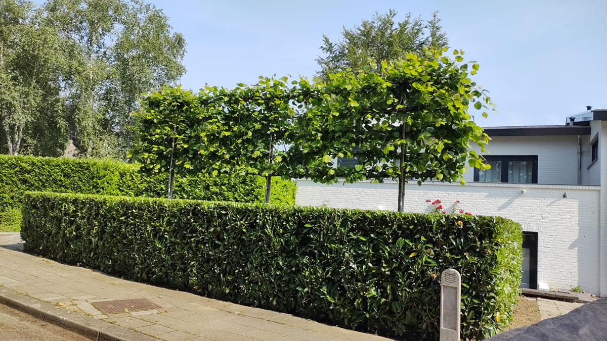 Maurits Garden - Portfolio - Hovenier Maastricht